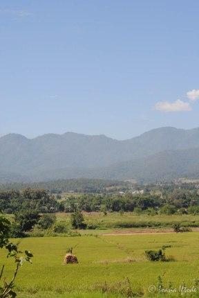 Thailand-3515