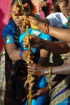 India-8380